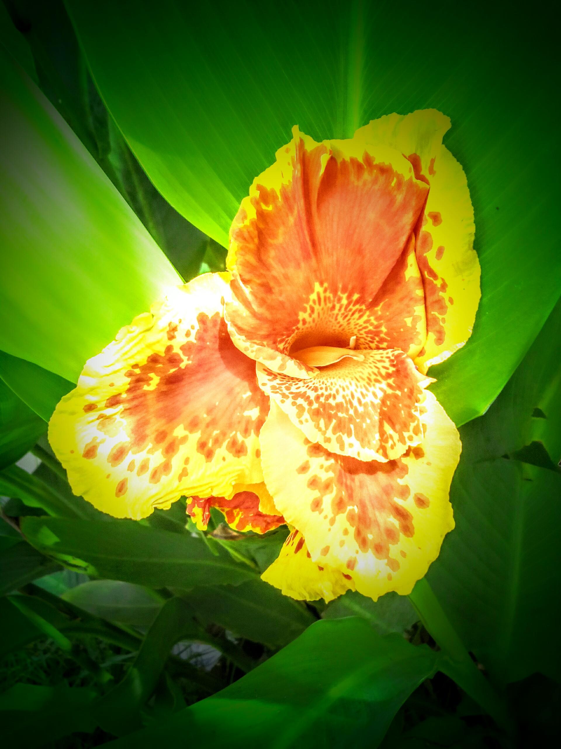 Filejasmine Yellow Flowerg Wikimedia Commons