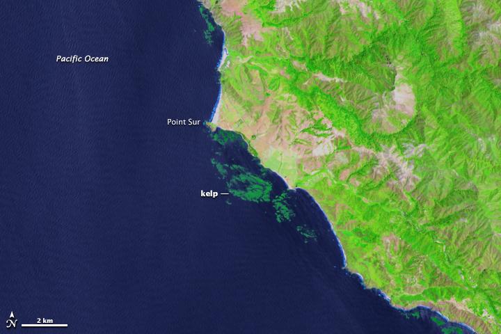 Kelp beds offshore Big Sur, 2013.jpg