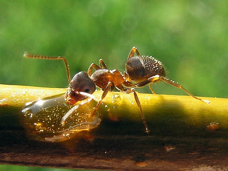 mi a hangyák látványa