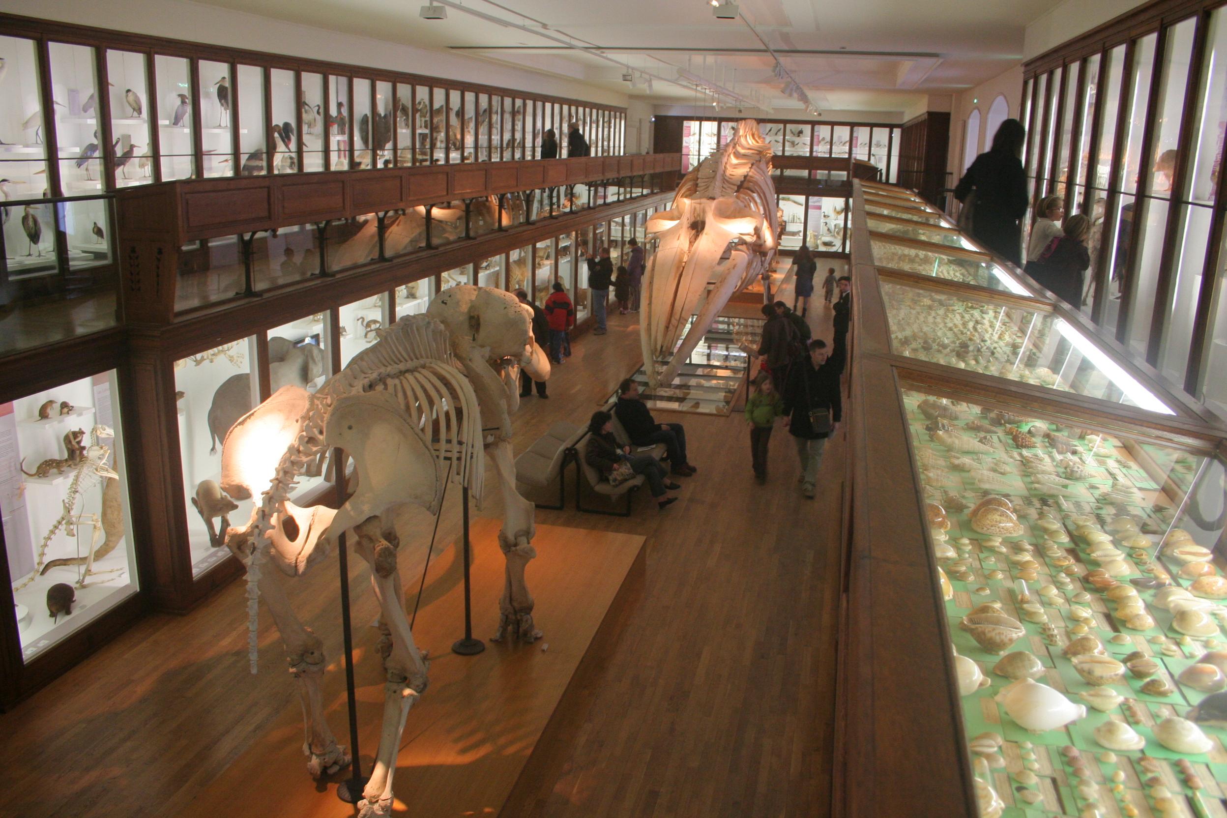 Fichier museum d 39 histoire naturelle nantes 2 jpg for Histoire des jardins wikipedia