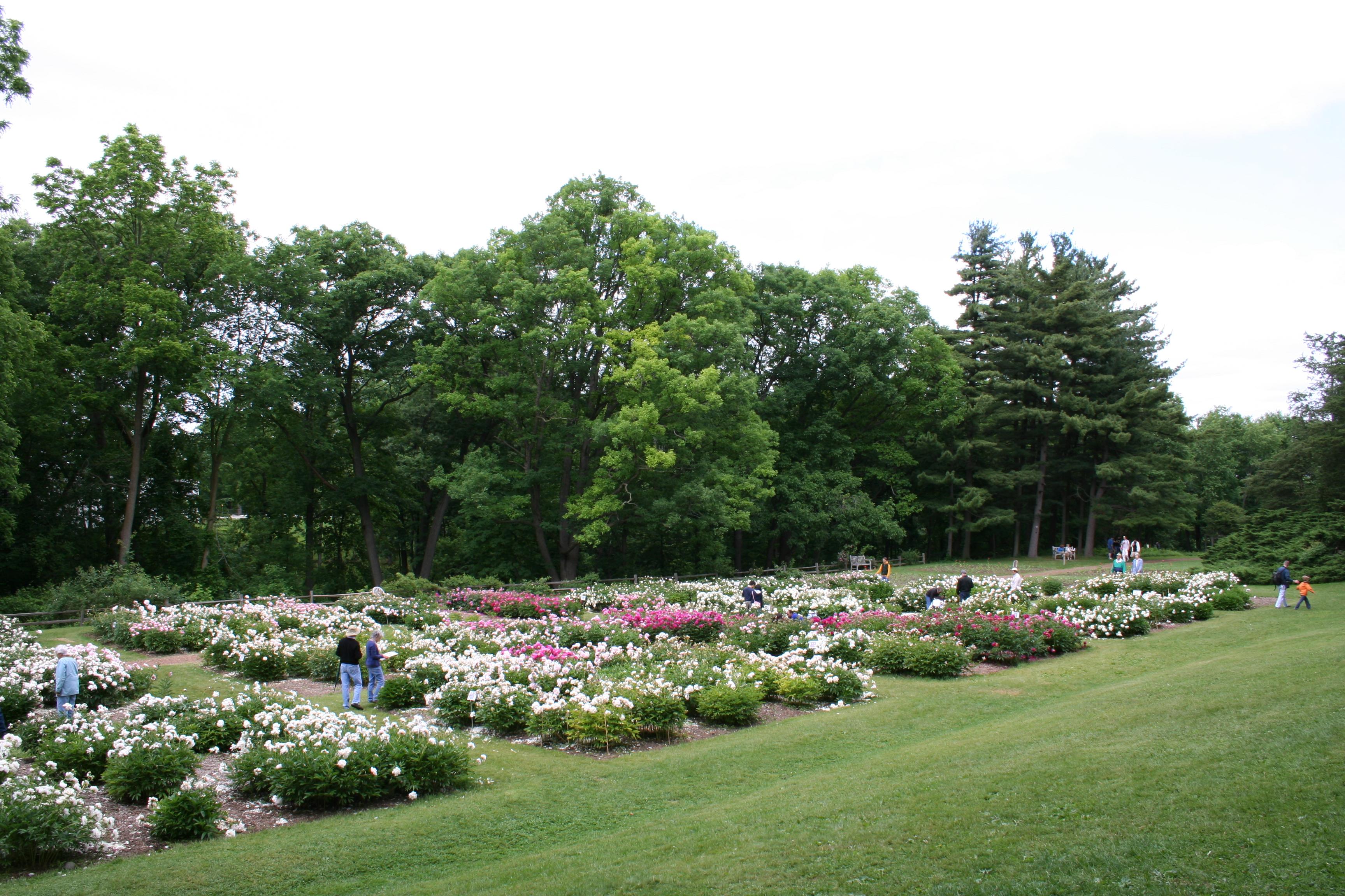 Nichols Arboretum - Wikiwand