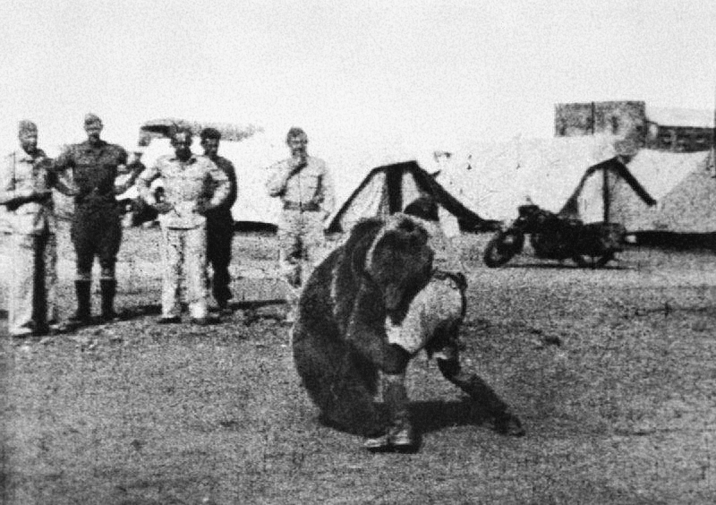 Polish 22 Transport Artillery Company watch as one of their comrades play wrestles with Wojtek their mascot bear during their service in the Middle East.