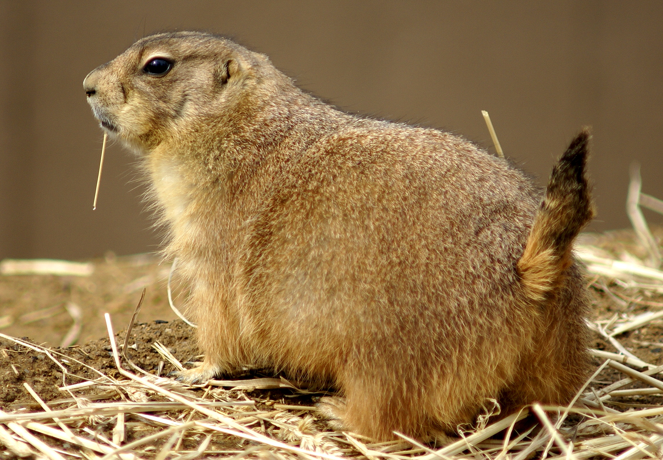 Prairie Dog Pictures With Captions