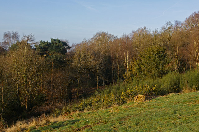Redhill Common - geograph.org.uk - 1213277