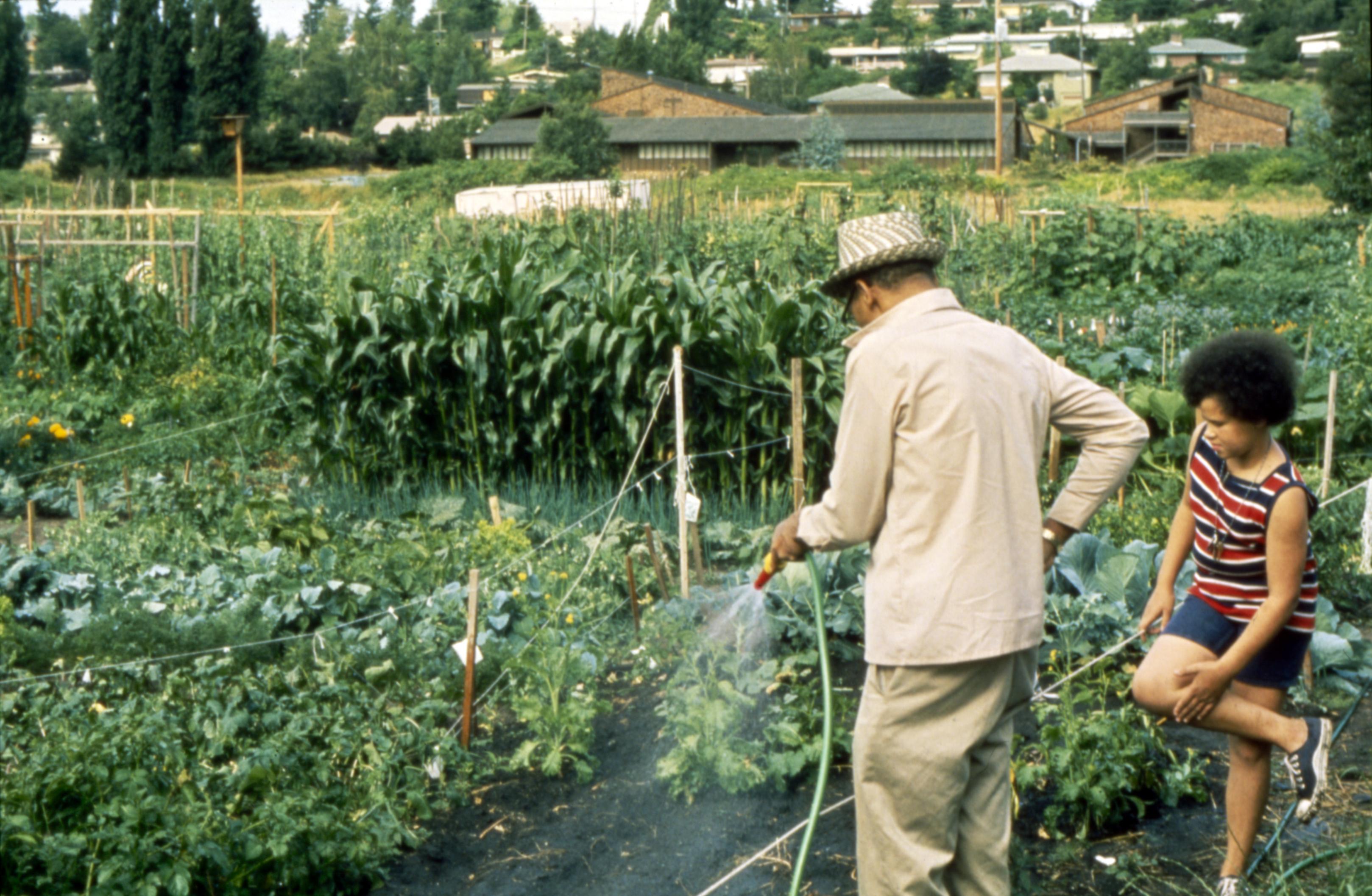 Genial File:Seattle   Gardening In Unidentified P Patch, 1990 (26482273396).