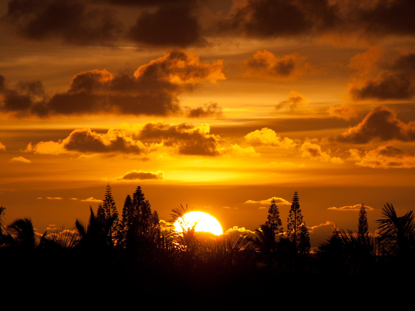 Description Sunrise, Kauai.jpg