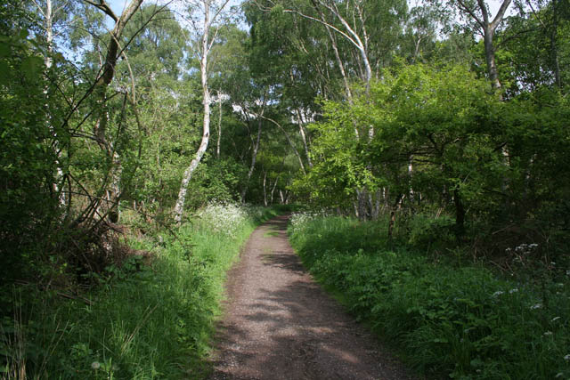 The Robin Hood Way, Sherwood Forest - geograph.org.uk - 1330744