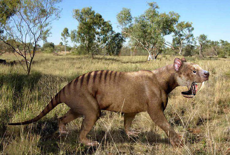 Thylacosmilus Amerika.jpg