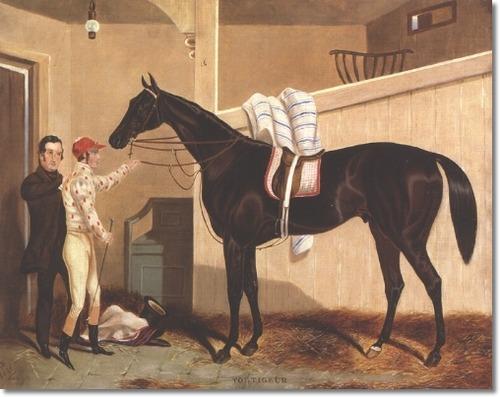 Voltigeur Horse Wikipedia