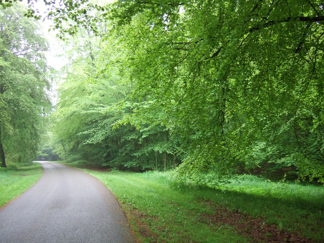 Wendover Woods, Chivery - geograph.org.uk - 170096