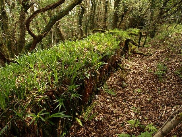 Woodrush on field boundary near Woody Bay - geograph.org.uk - 1286151