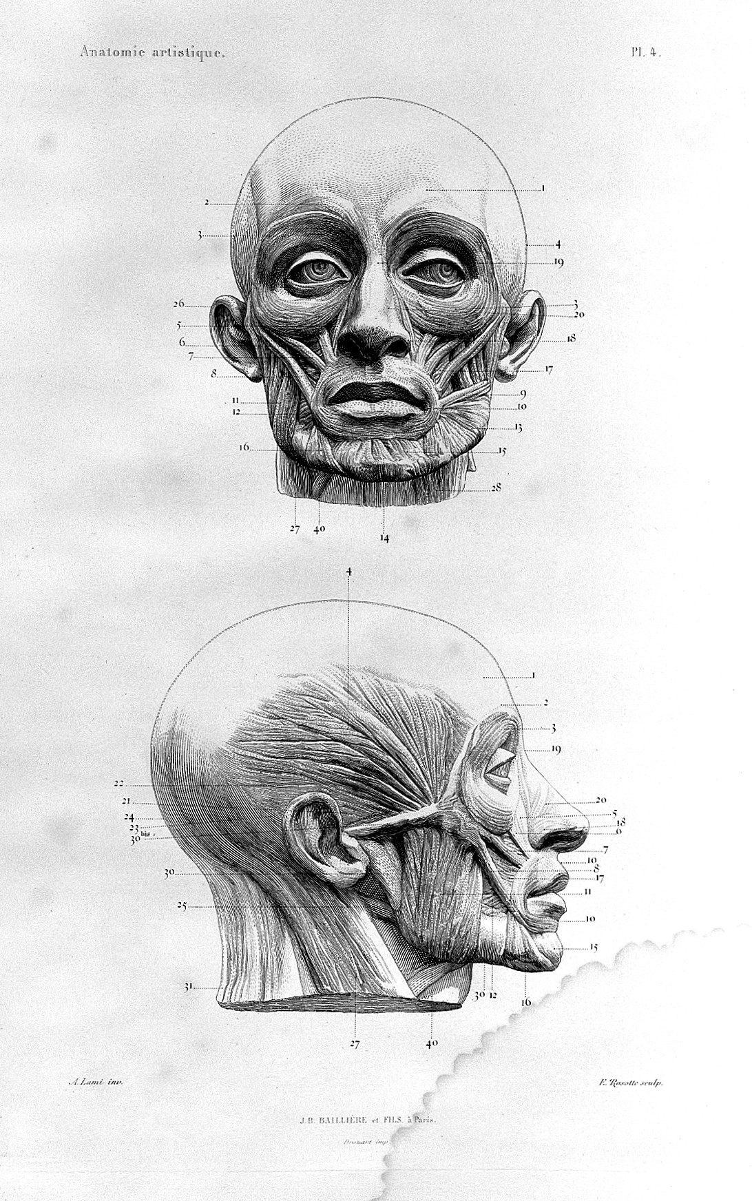 Filealphonse Lami Muscles Of The Face 1861 Wellcome L0025112g