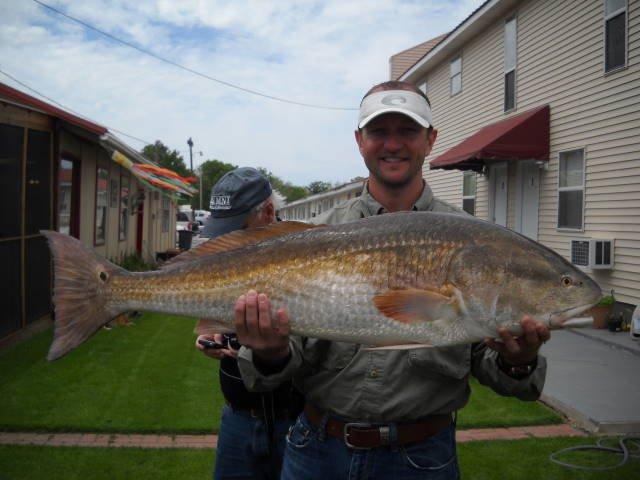 File big redfish fishing wikimedia commons for Fishing in louisiana