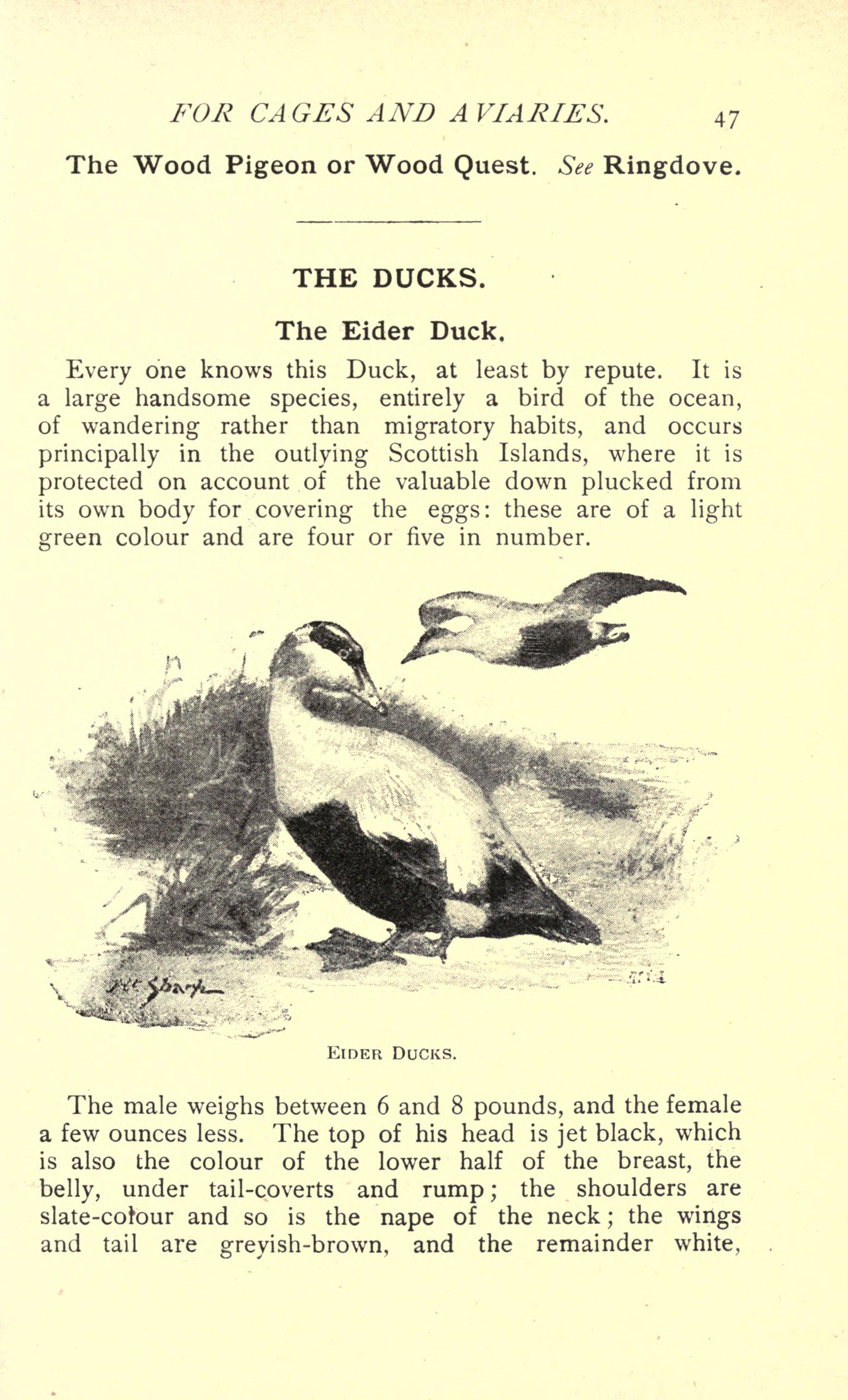 File:British birds for cages and aviaries (Page 47) BHL17127606.jpg ...