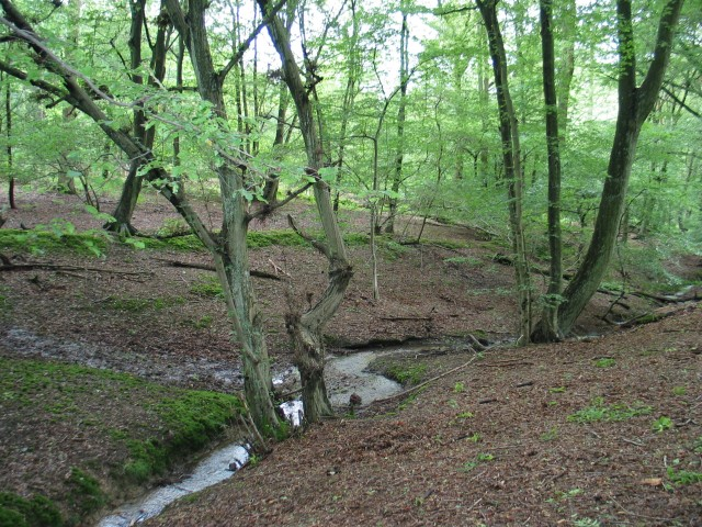 Cuffley Brook and wall, Northaw Great Wood - geograph.org.uk - 448415