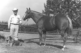 クォーターホース - Horse Scanner