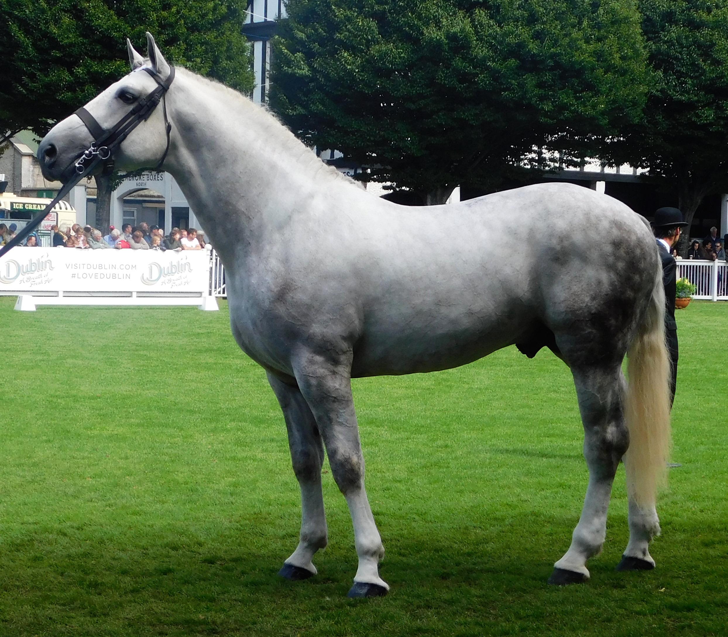 Buy Sport Irish horse dun pictures pictures trends
