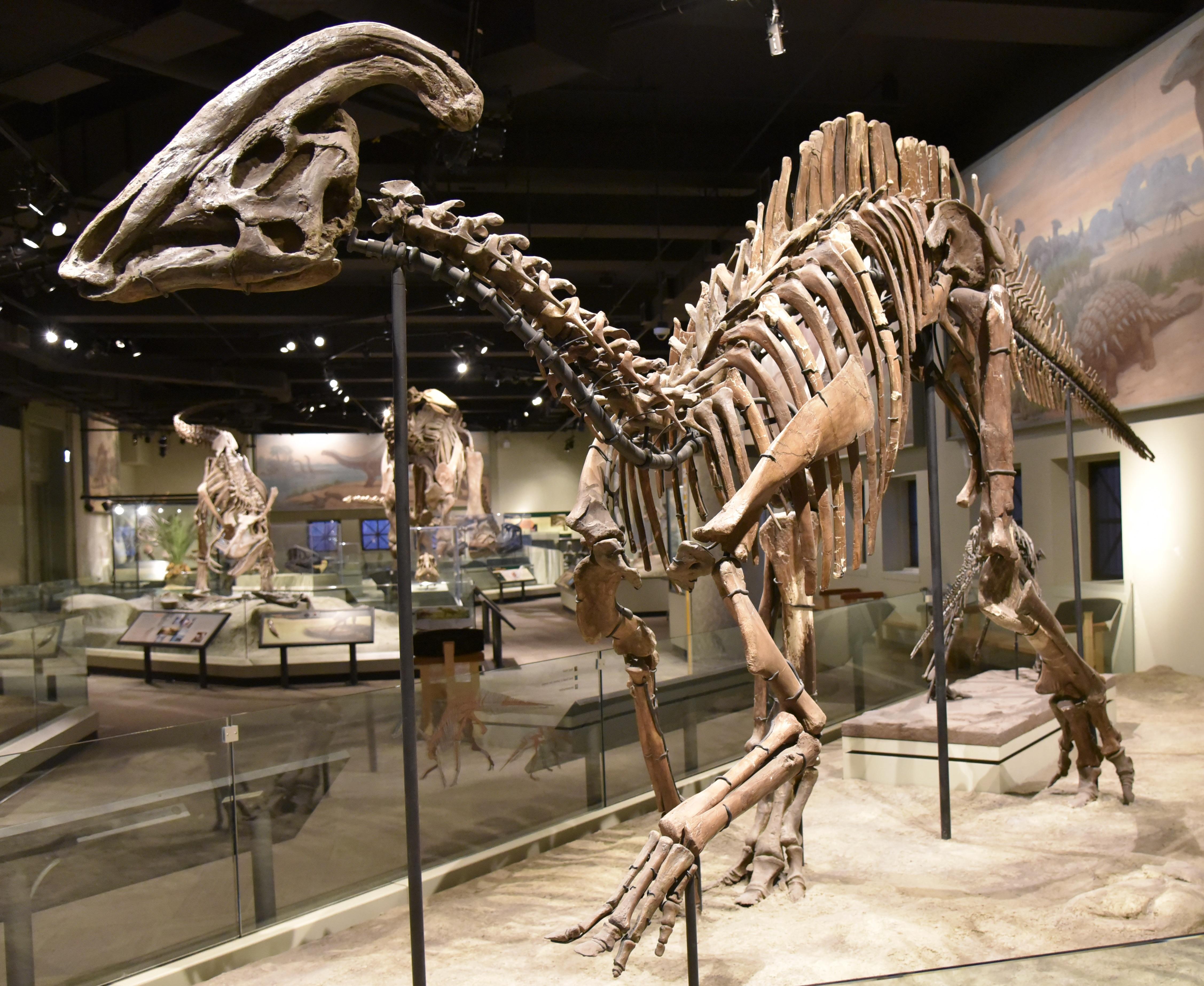 Parasaurolophus - Wikipedia
