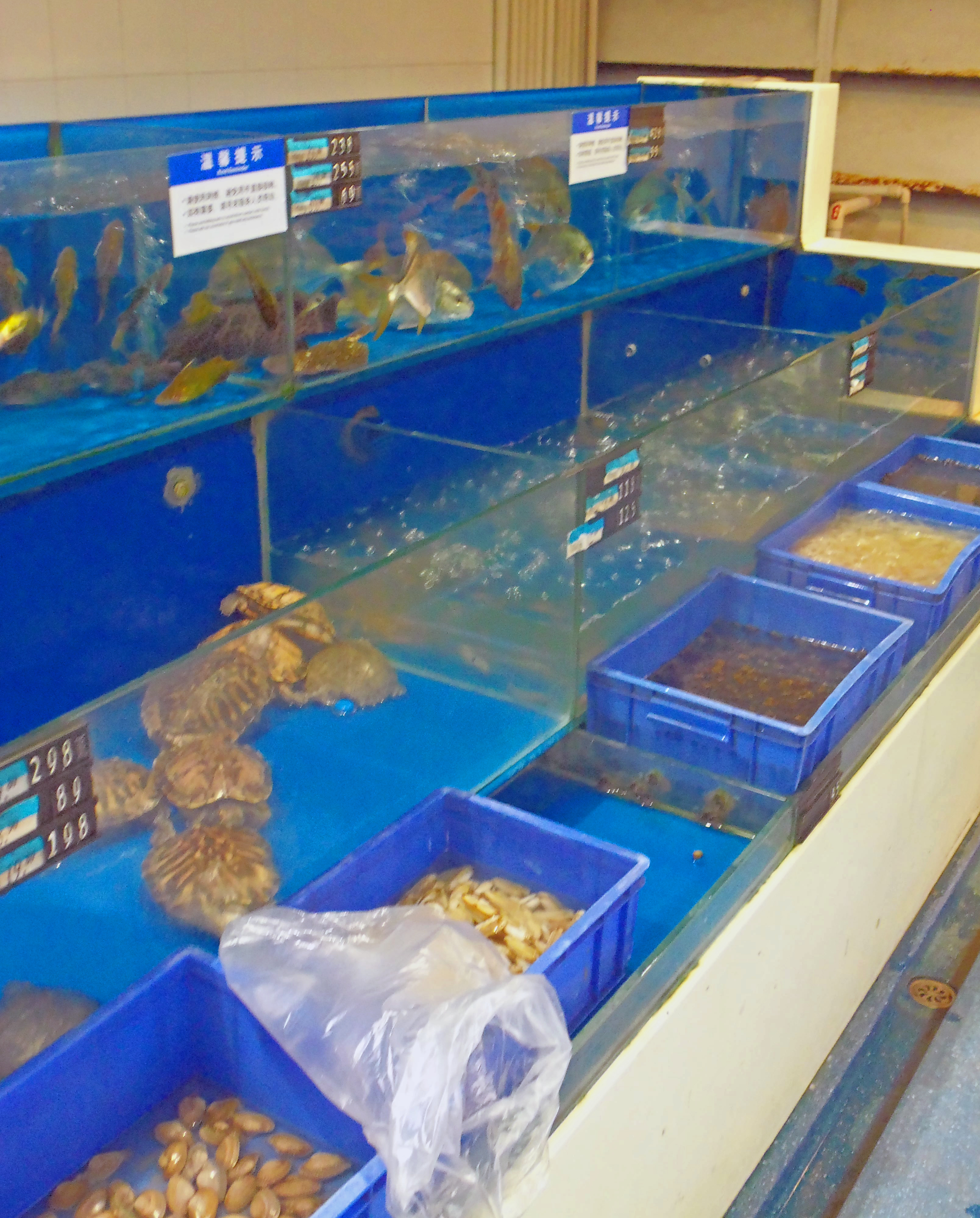 File fish tanks and turtle pen at wal mart shenzhen for Types of fish at walmart