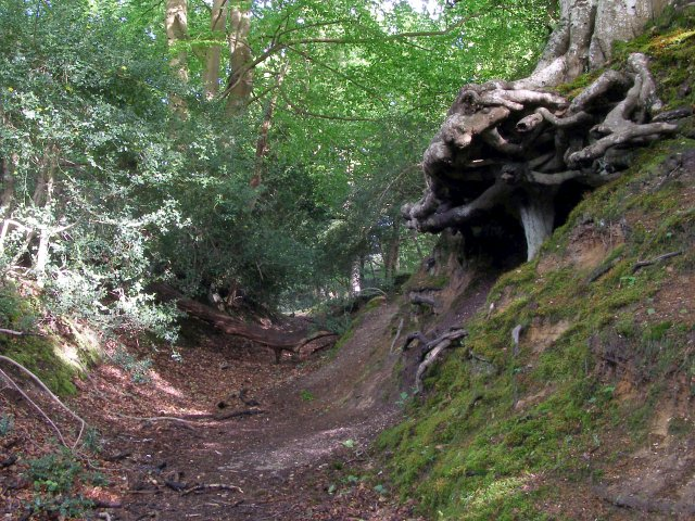 Hollow_way_on_the_western_edge_of_Ridley_Wood%2C_New_Forest_-_geograph.org.uk_-_433137.jpg