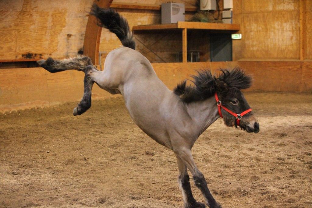 File Horse Jumping Jpg Wikimedia Commons