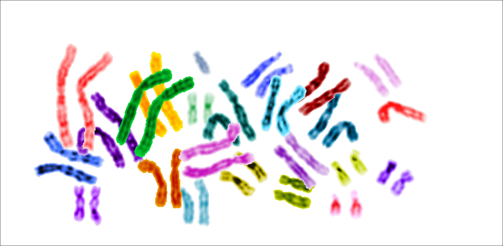 File karyotype color chromosomes white for Fish genetic testing