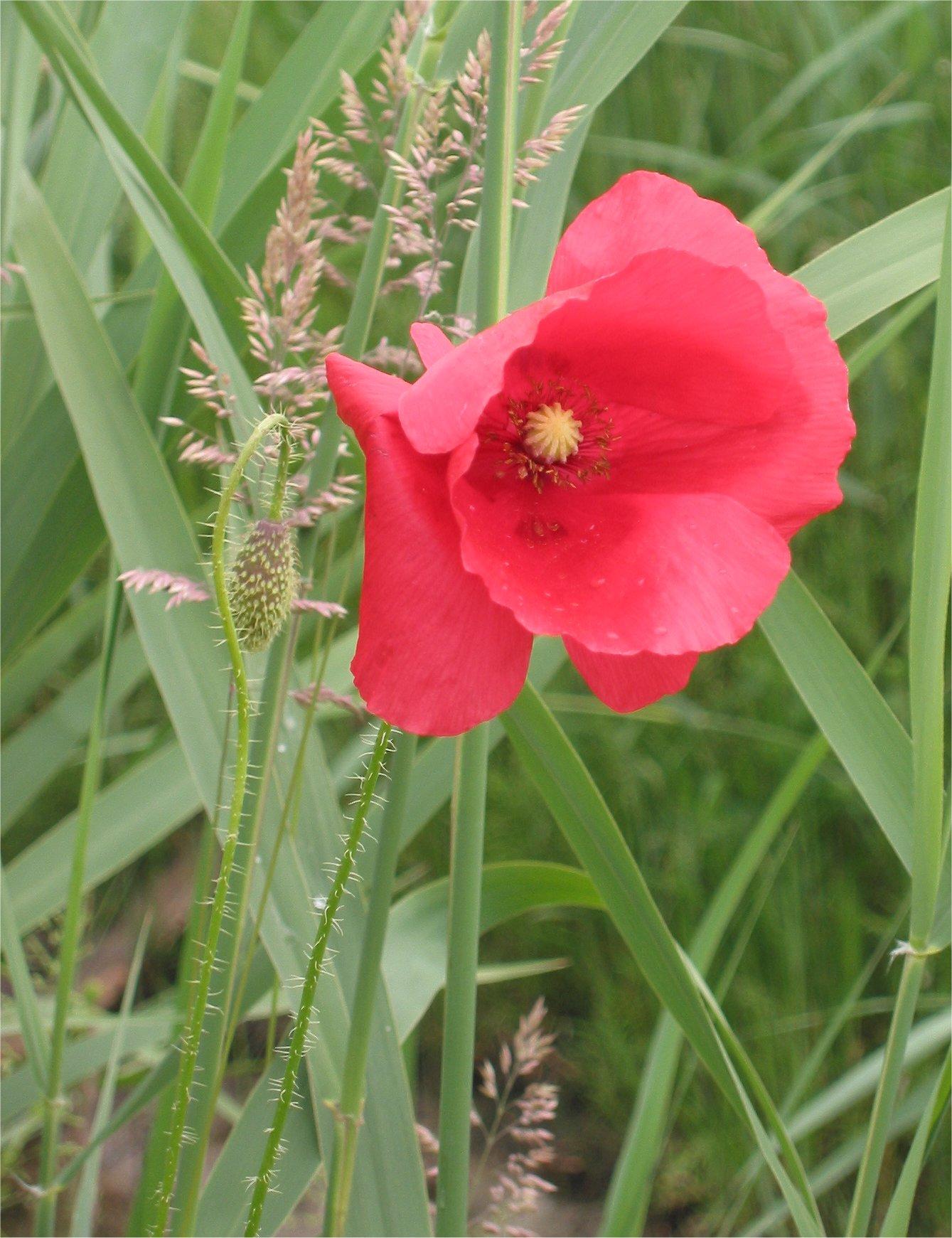 lugnande blomma