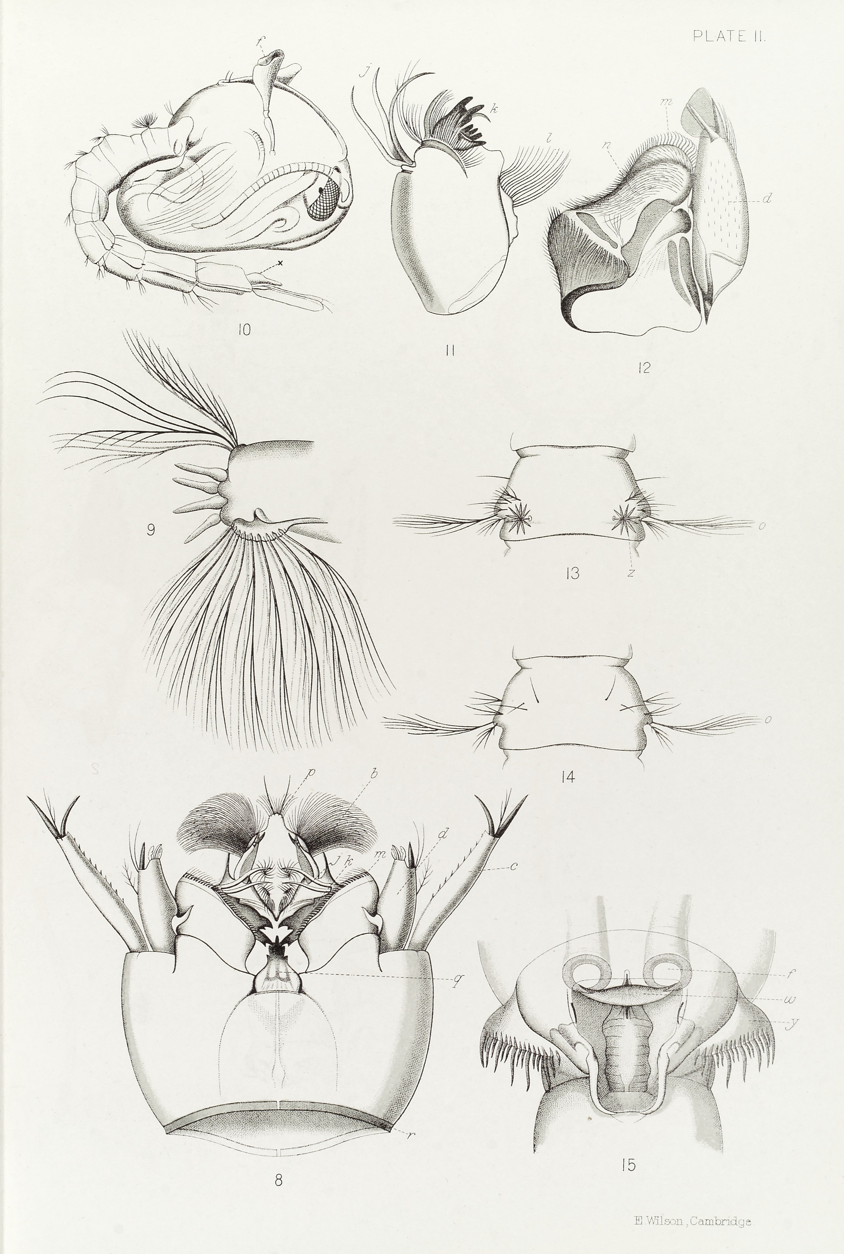 File:Life cycle & anatomy of Anopheles mosquito, 1901 Wellcome ...