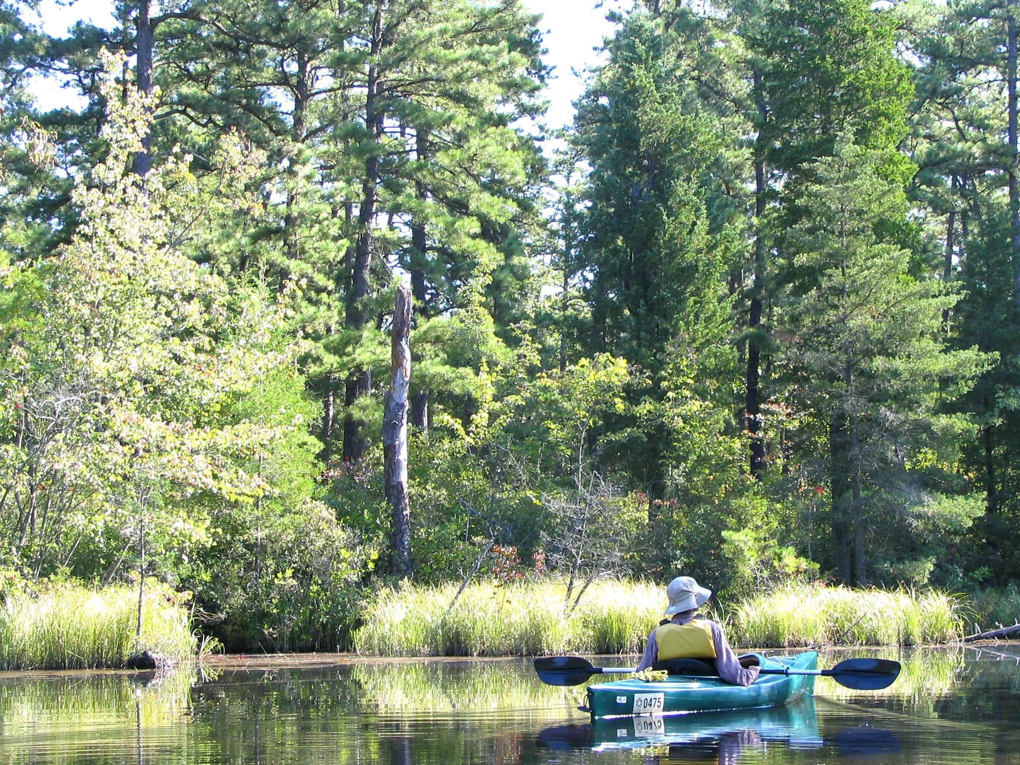Wharton State Forest - Wikipedia