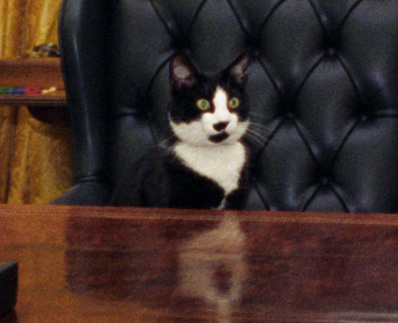 Fichier:Photograph of Socks the Cat Sitting Behind the President's Desk in the Oval Office- 01-07-1994 (6461515323) (cropped1).jpg