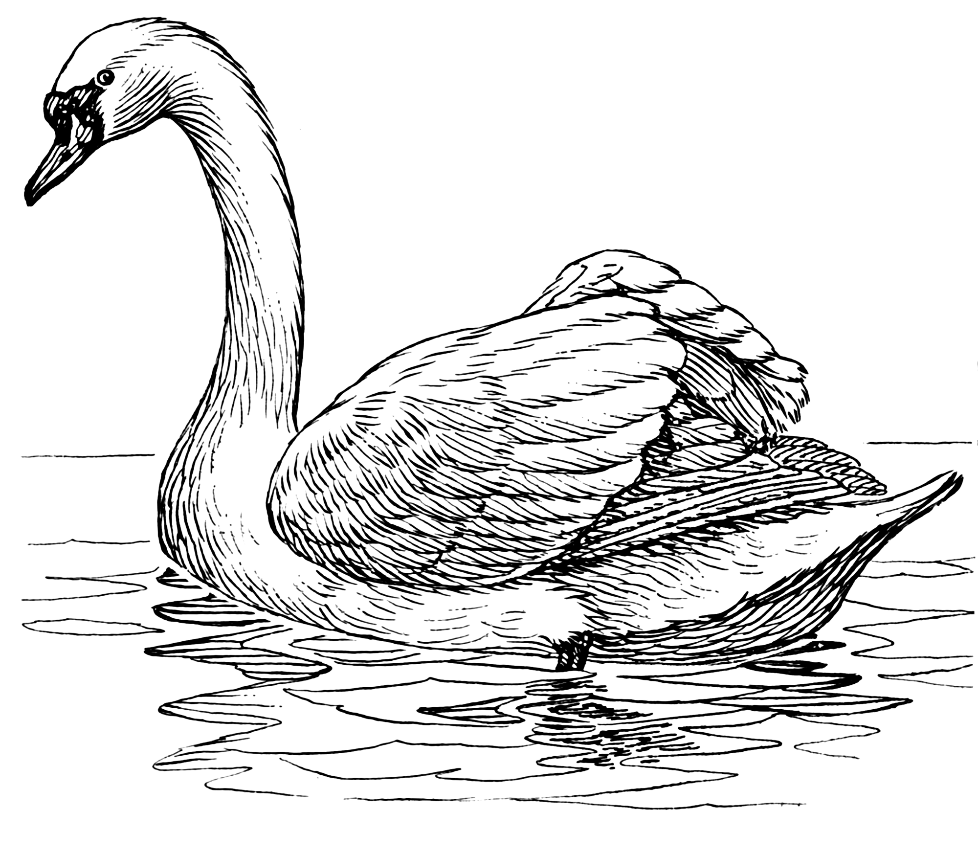File Swan 2 Psf Png Wikimedia Commons