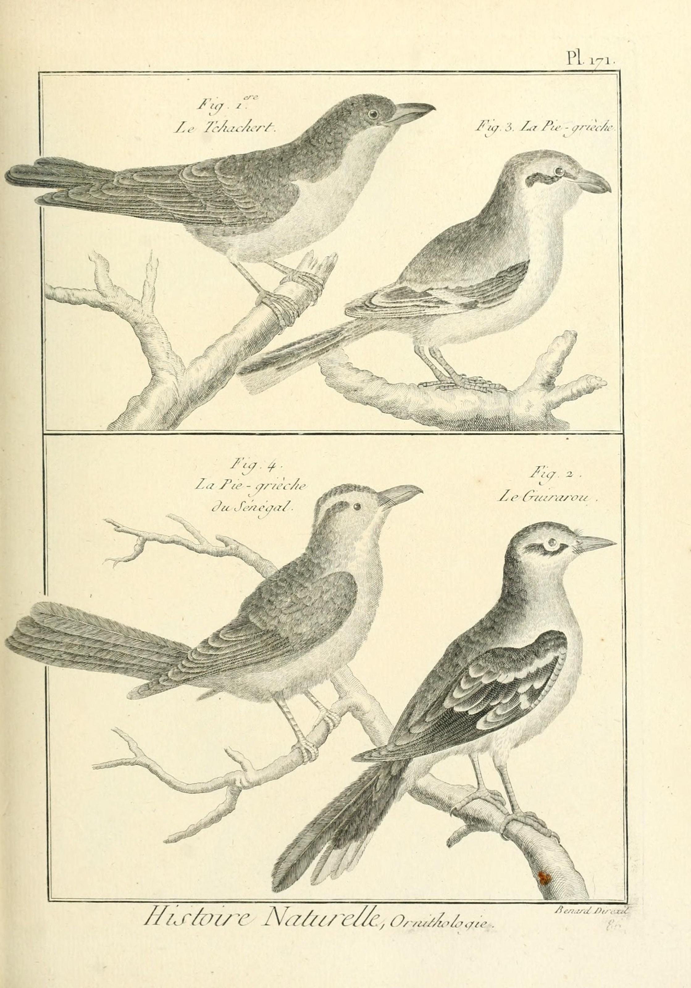 File Tableau Encyclopedique Et Methodique Des Trois Regnes De La Nature Pl 171 7850696796 Jpg Wikimedia Commons