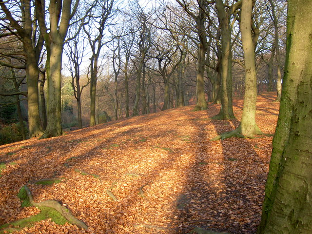 Tandle Hill Country Park, Royton - geograph.org.uk - 618299
