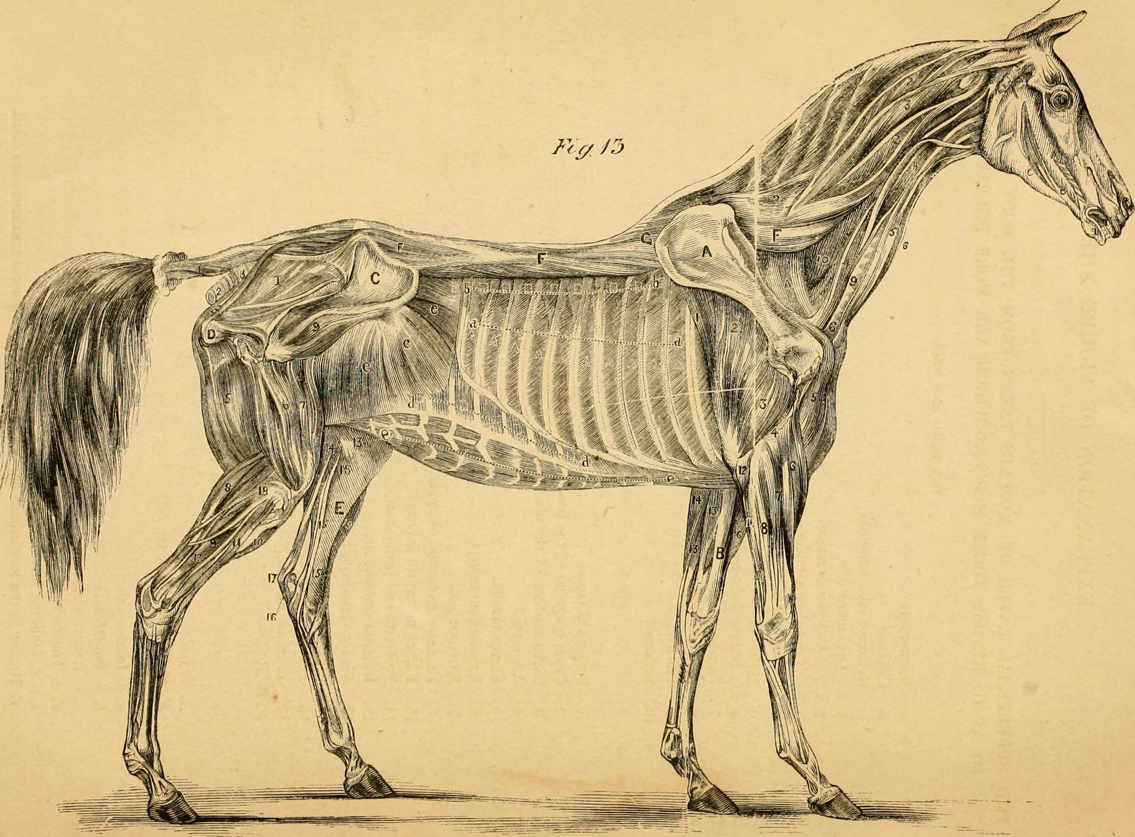 Groß Vertebrate Anatomy And Physiology Fotos - Physiologie Von ...