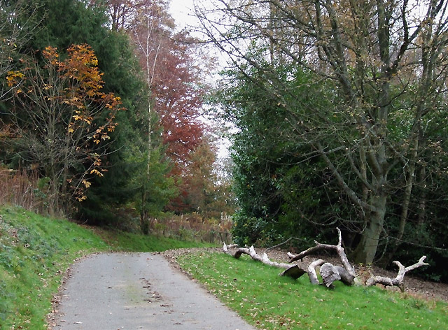 Through Bryan's Wood, Burwarton, Shropshire - geograph.org.uk - 605993
