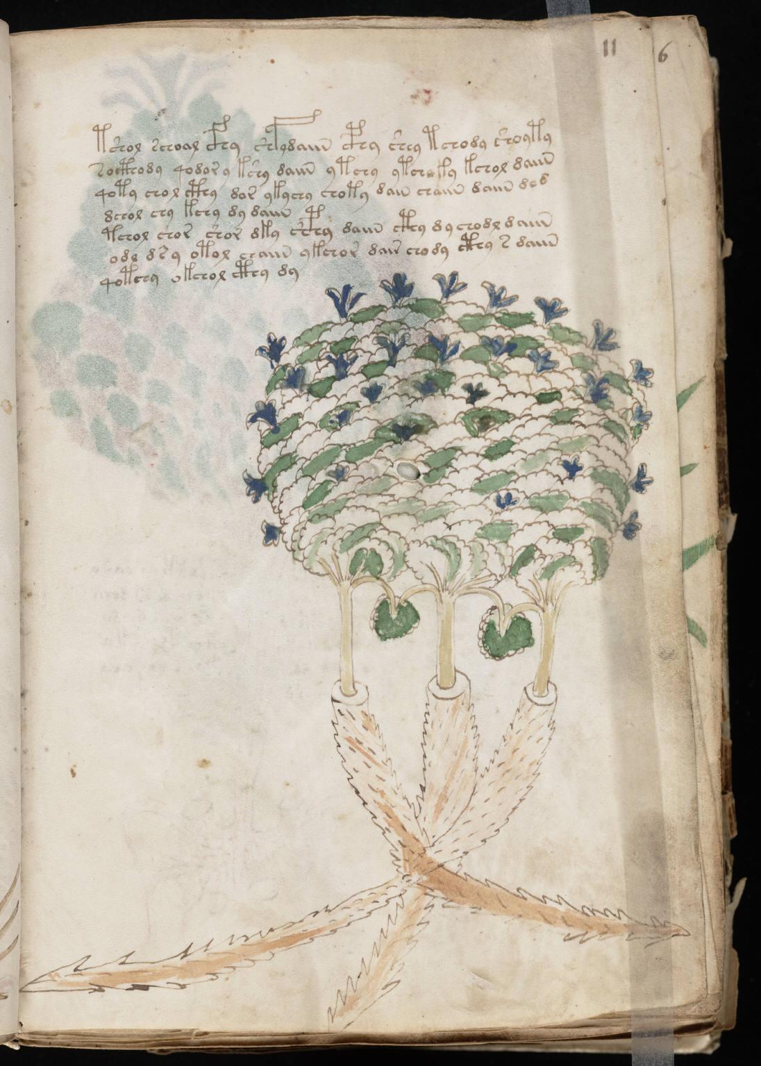 https://upload.wikimedia.org/wikipedia/commons/f/f2/Voynich_Manuscript_%2823%29.jpg