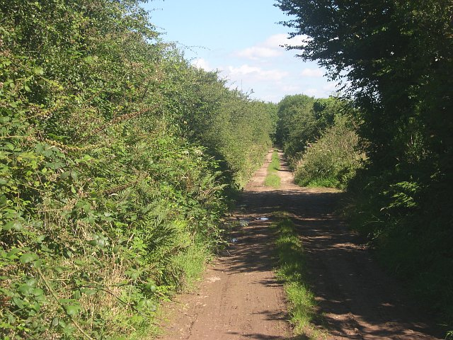 "File:""Green lane"" on the eastern side of Hingston Down - geograph.org.uk - 34661.jpg"