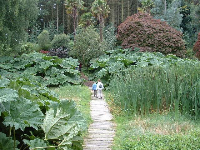 filebog garden geographorguk 47396jpg - Bog Garden