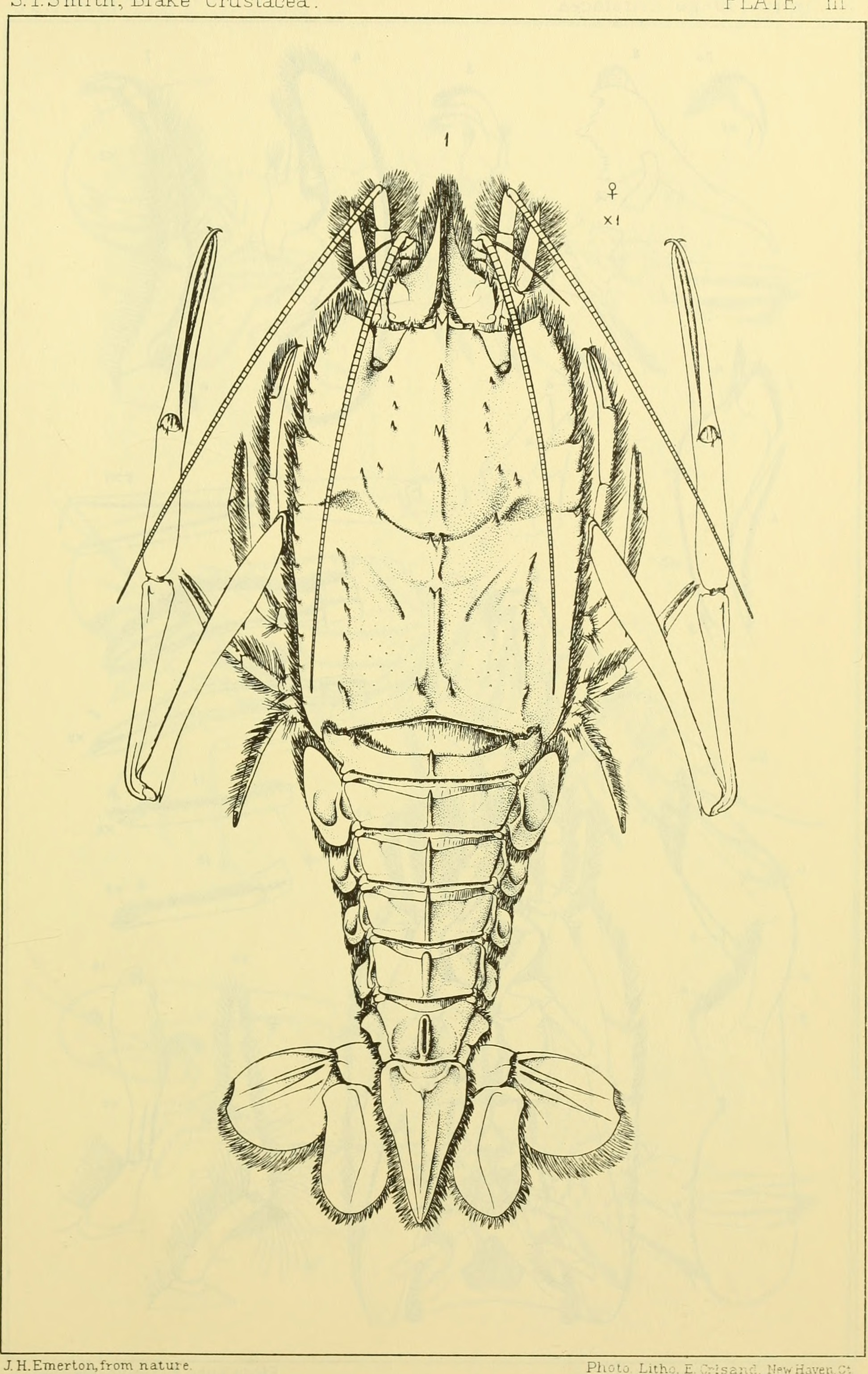 File:Bulletin of the Museum of Comparative Zoology at Harvard ...
