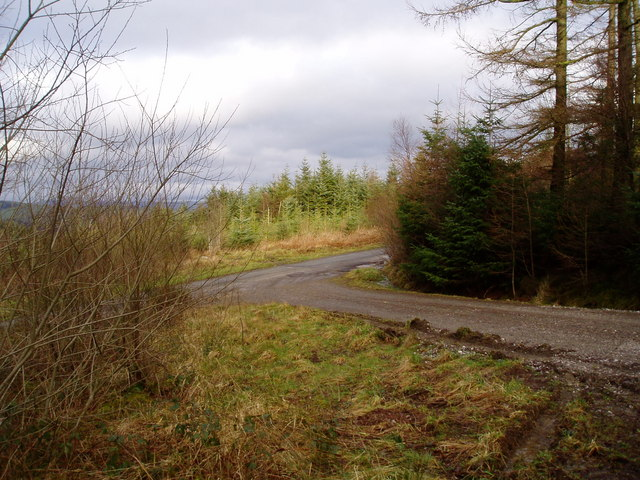 Clocaenog forest - geograph.org.uk - 322652