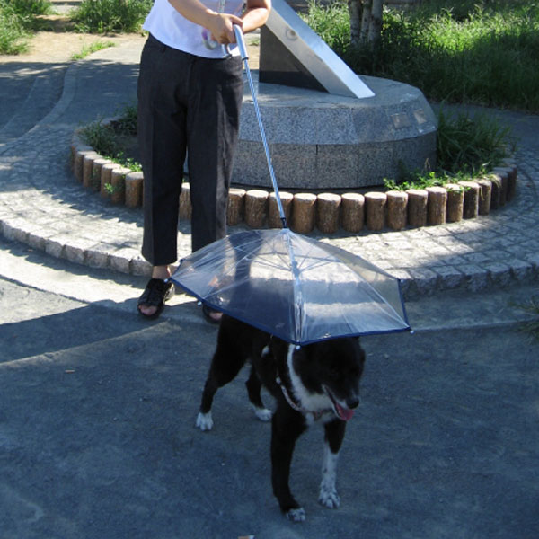 File:Dog Umbrella.jpg