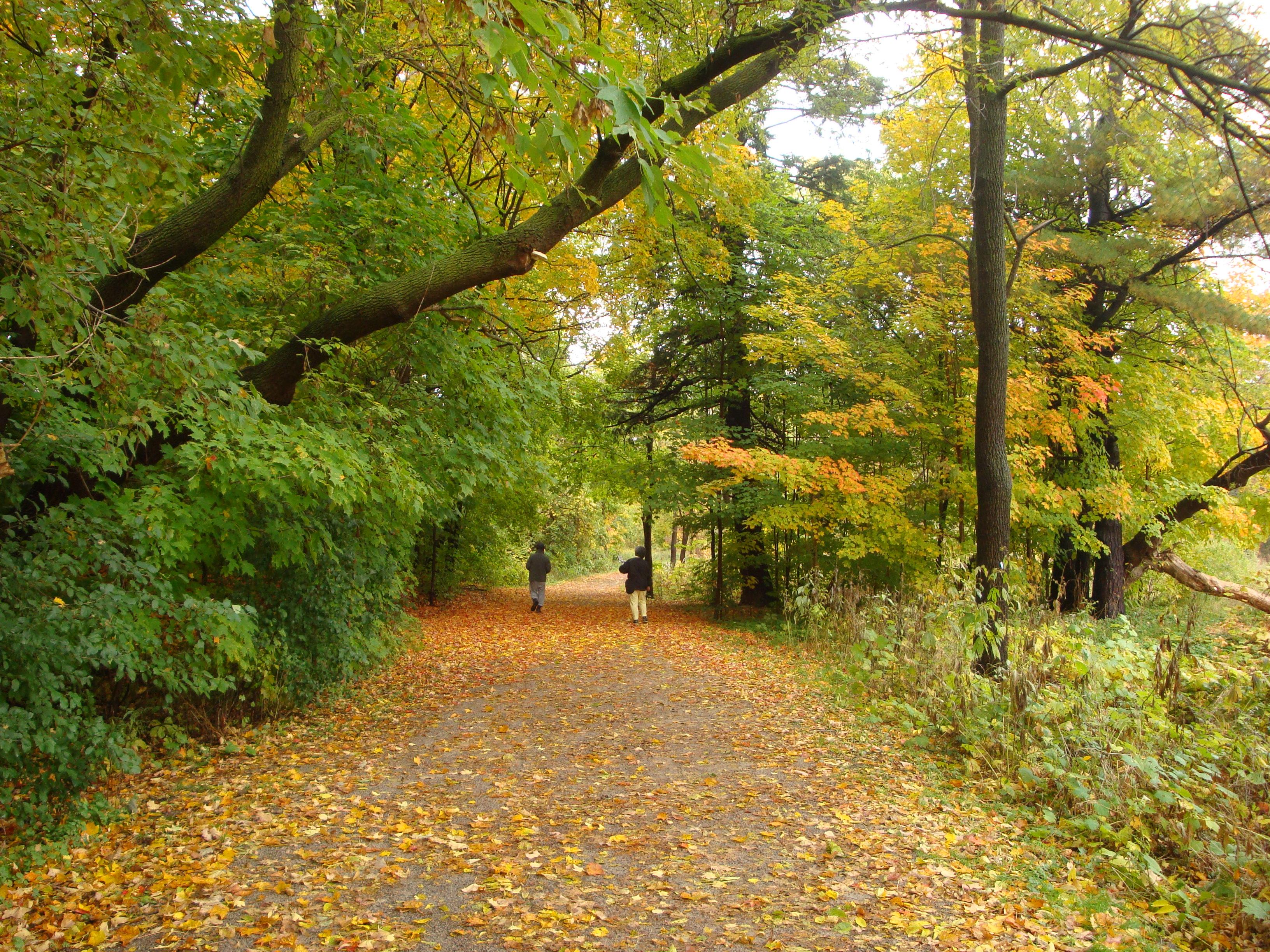 Dog Park Etobicoke