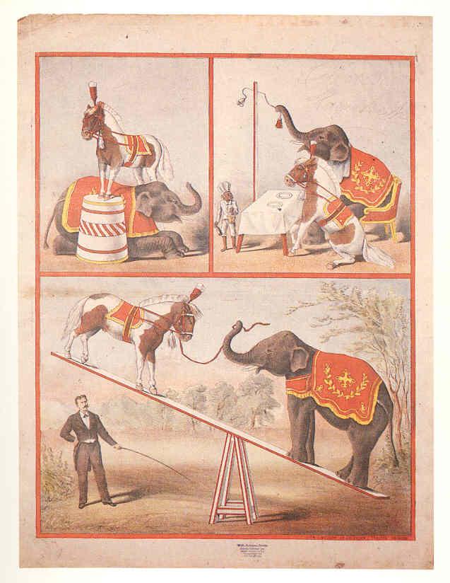 Adolph Friedländer: Pony und Elefant. Plakat für Carl Hagenbecks Zoologischen Zirkus, 1895/1896