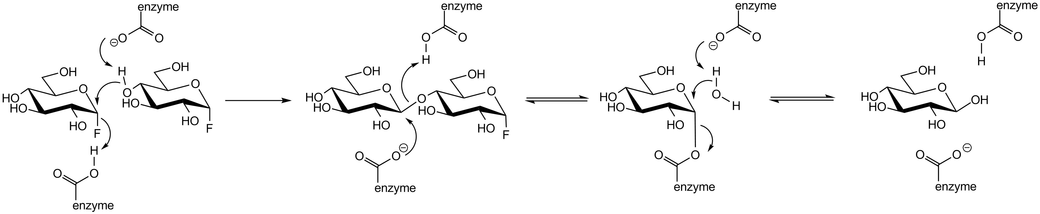 File:Glycosidase transglycosylation mechanism.png ...