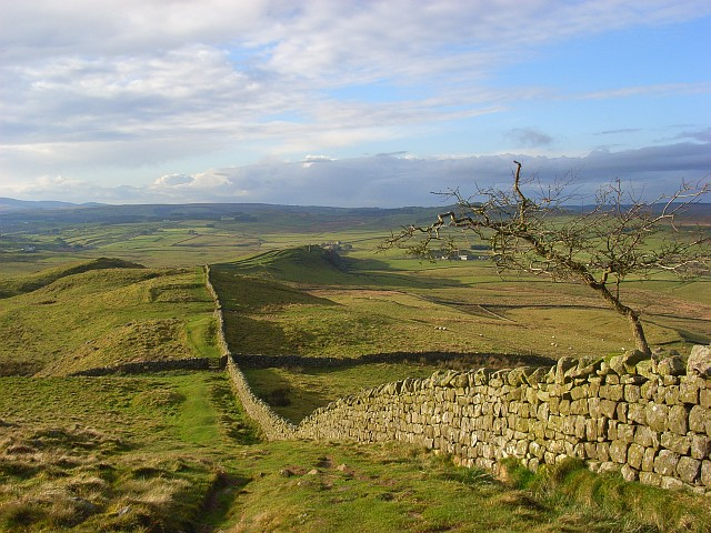 Hadrian's Wall and old tree, Melkridge Common - geograph.org.uk - 1068757