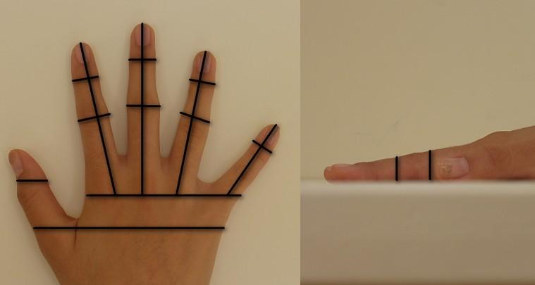 Hand geometry - Wikipedia
