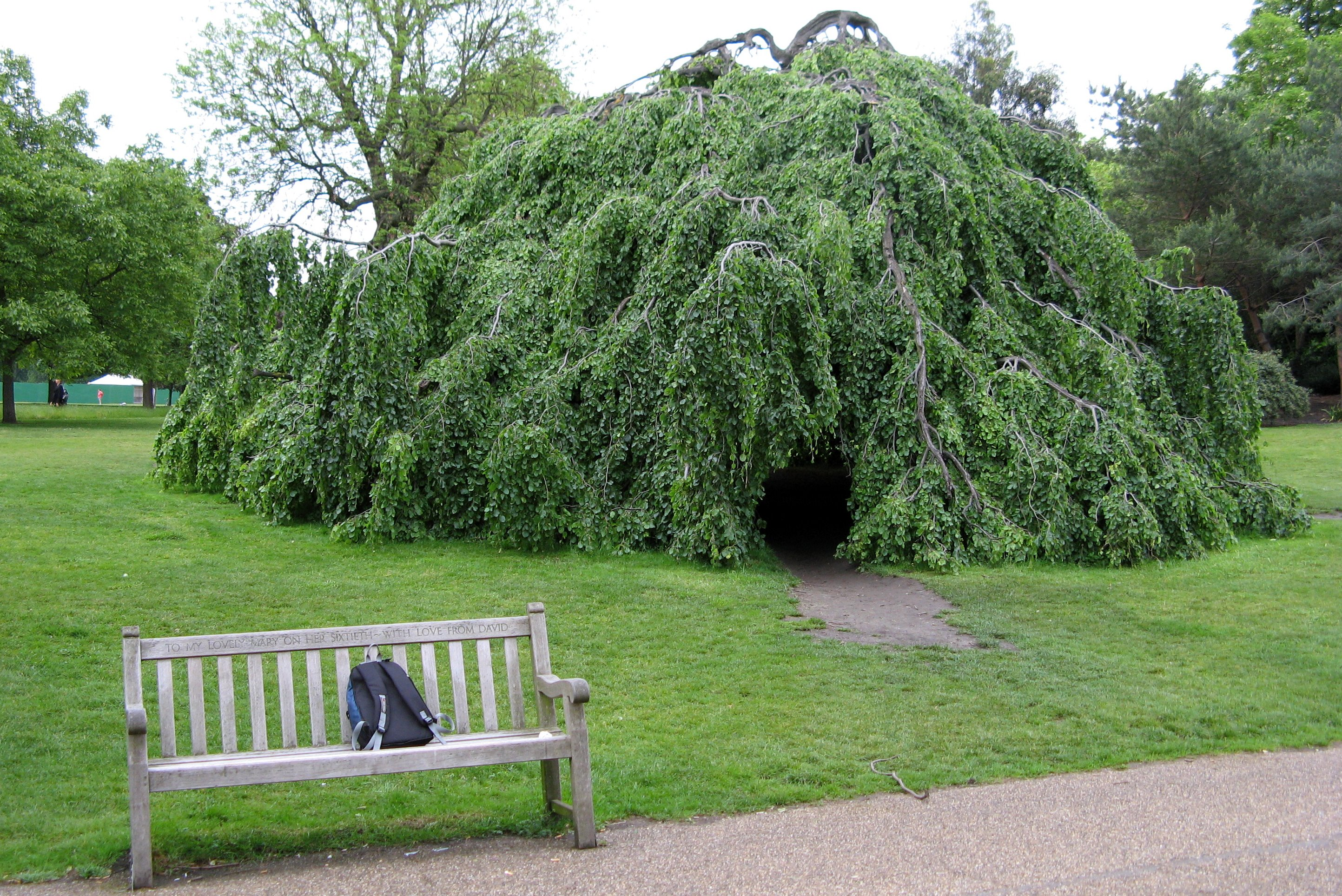 File:Hyde park tree.jpg  Wikipedia, the free encyclopedia