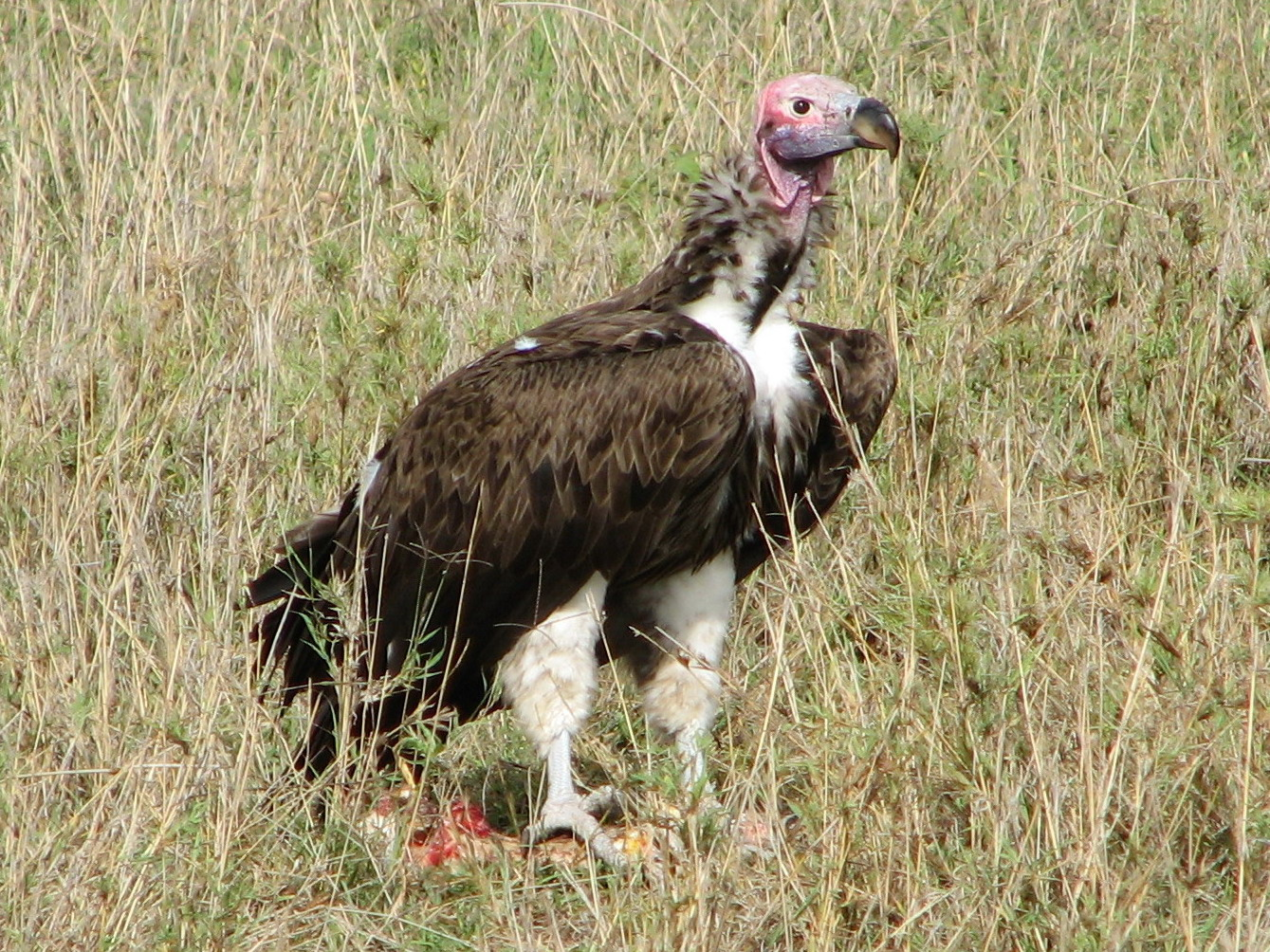 10 Fascinating Facts About Vultures