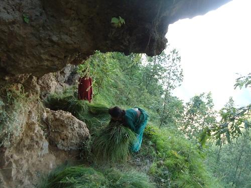 Nuwakot forest site