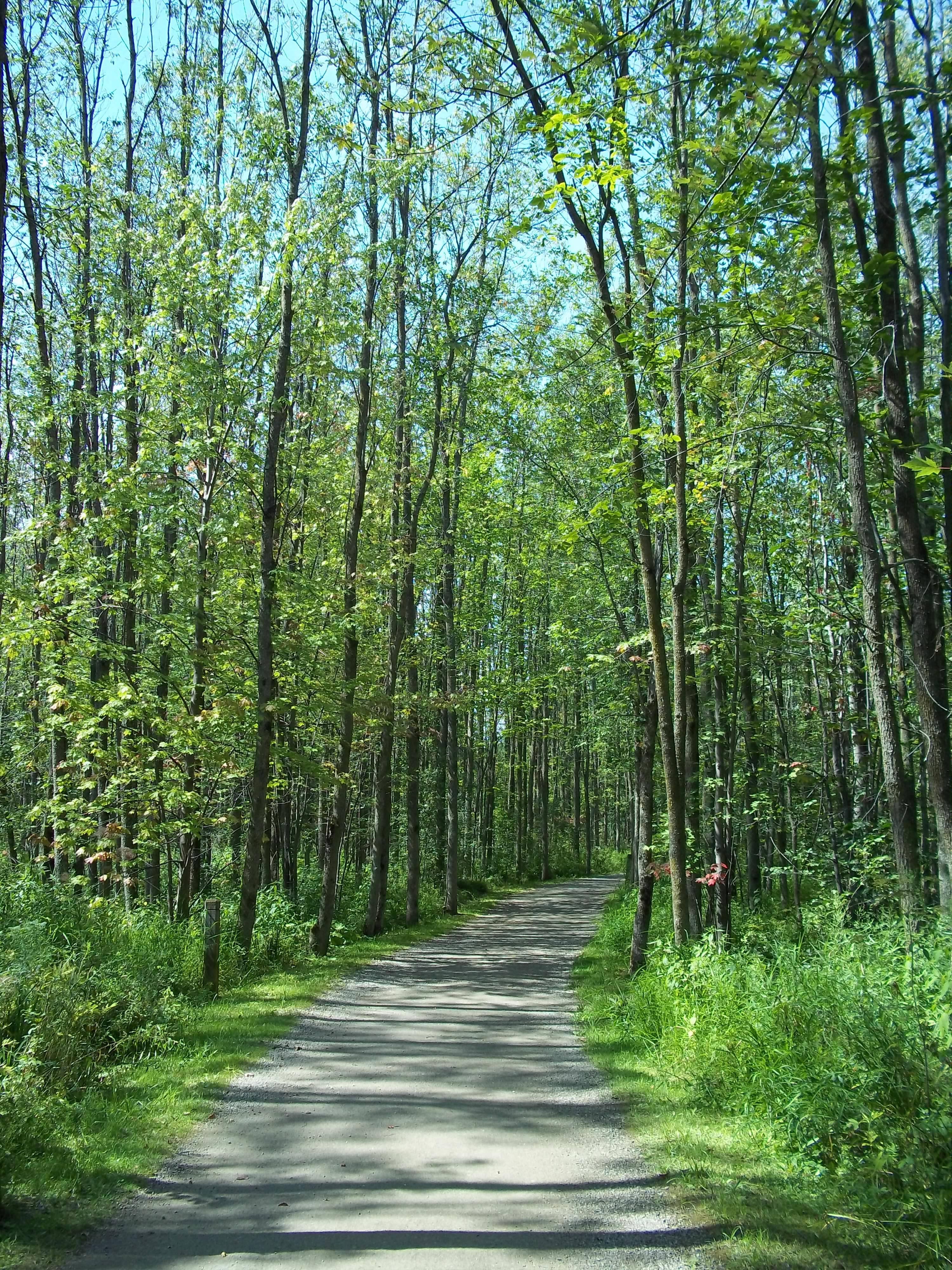 Parc-nature_du_Bois-de-l-ile-Bizard_68.j